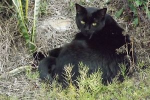 12 year old much loved cat child Holmview Logan Area Preview