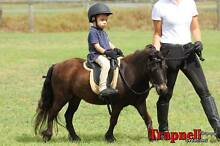 "PRICE DROP ""Pebbles"" 9yr 9hh Kids Mini Shetland Beenleigh Logan Area Preview"
