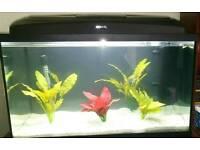 Aquael fish tank and hood