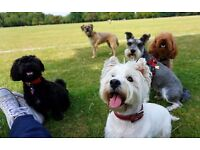 Looking for a part time dog walker in Tower Hamlets for long term