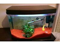 Tropical Fish Tank with Female Parrot Fish