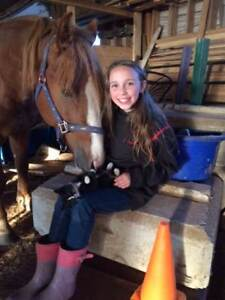 Looking For Kid Safe Saddle Horse