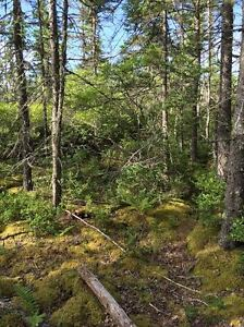 43 acres on the south shore near the ocean