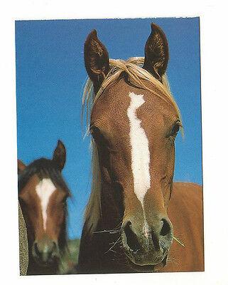 Pferdepostkarte Quarterhorse-Mix-Porträt Weltbild /Boiselle Sehr guter Zustand gebraucht kaufen  Deutschland