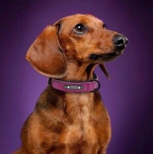 Best Personalized ID Collars for Cats & Dogs - #1 in Canada!