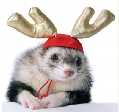 Marshall Ferret Toy Christmas Reindeer Deer Antler Hat -