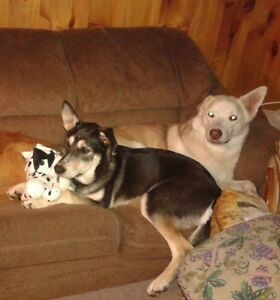 MISSING TWO DOGS $1000 REWARD