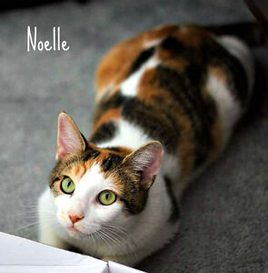 MEET OUR SWEET NOELLE...FIXED/SHOTS