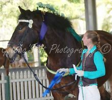 Horse And Rider, Training and Educations... Mothar Mountain Gympie Area Preview