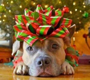 Professional Pet Grooming - Christmas Bookings
