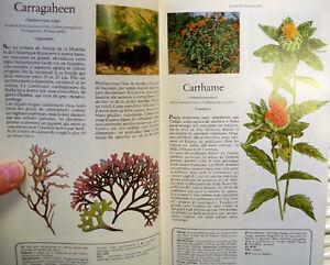 Secrets et vertus des plantes médicinales / Sélection Reader's Québec City Québec image 2