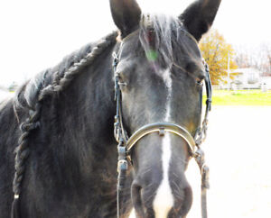 Eventing Mare for Lease