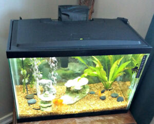 Aquarium(20 GAL.) + Accessories. All cleaned! OFFERS?