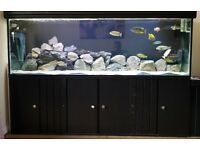 6ft Aquarium and Cabinet ND Aquatics