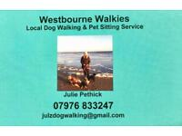 Experienced Dog Walker in Poole and surrounding areas.
