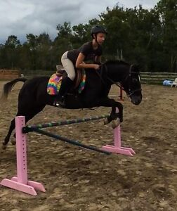 Appaloosas mare for free lease