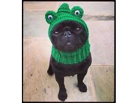 The Frog Dog hat. Snood, neck warmer for your dog, pug, frenchie, terrier, spaniel, greyhound