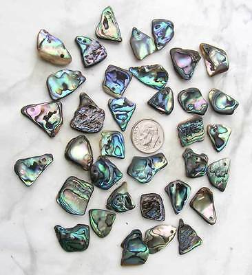 BWT - 6pc Small New Zealand Paua/Abalone Top Drilled Shells- Jewelry- Scrapbook for sale  Corpus Christi