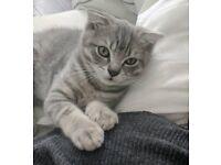 Gorgeous Loving kitten