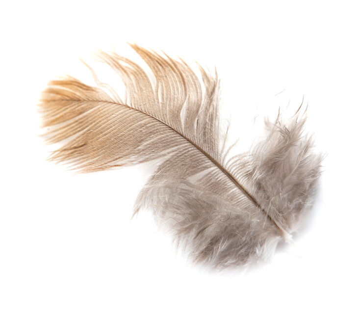 How To Clean Down Feathers Ebay