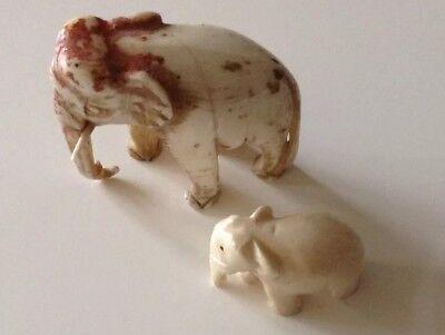 Elefant Knochen