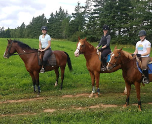 Spring Riding Lessons