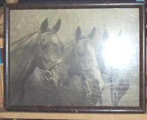 Photograph - Three Horses – only $10