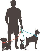 Dog Walking by Liam - Affordable & Reliable!