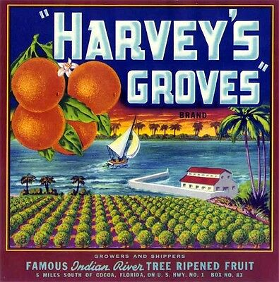 Harvey's Groves Fruit Crate Label Art Print   Indian River Cocoa Fl (Indian River Groves)