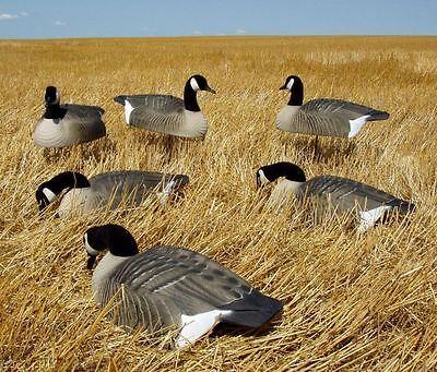 Avery Greenhead Gear GHG Canada Goose Shell Decoys 6 NEW!