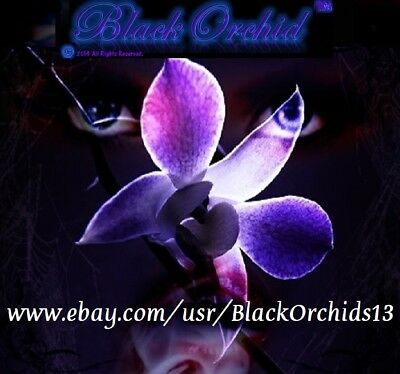 BlackOrchids13