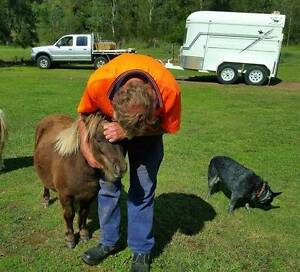 Beautiful people/kid orientated taffy mini pony filly. Port Stephens Area Preview