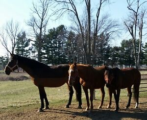 REDUCED PRICE - WINTER HORSE LEASES