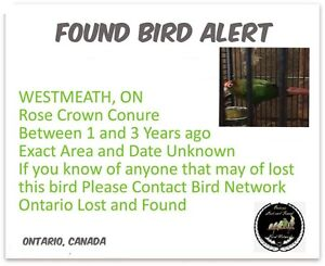 FOUND PARROT LOOKING FOR OWNER