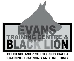 Dog Training at Blacklion Kennels