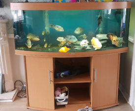Trade 5ft for 7ft plus fish tank