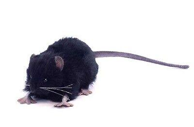 Hansa Toys Black Rat Mouse 5578 Plush Stuffed Animal Play Toy Decor Prop New