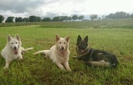 Dog Walker and Dog Training