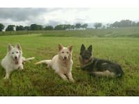 Dog Walker and Dog Training