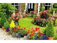 General Gardening,Grass cutting,Hedge Cutting, Weed Control,Lawn Maintenance,Tree pruning & Removal