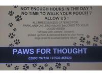 dog minding & walking services