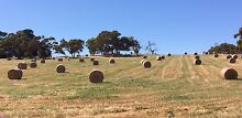Cereal hay, 5x4 rounds, oats & annual rye Pages Flat Alexandrina Area Preview