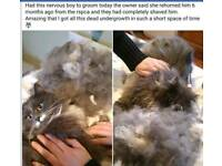 Mobile Cat Groomer