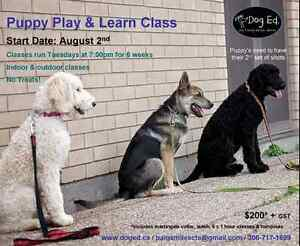Puppy Play & Learn Class