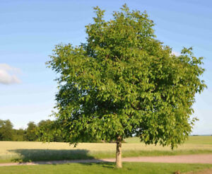 Fruit and Nut Trees Wanted