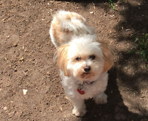 Small white Maltese cross dog missing Cathedral area last night