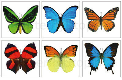 orary Tattoos - 6 Sheets - For Adults and Children (Butterfly Tats)