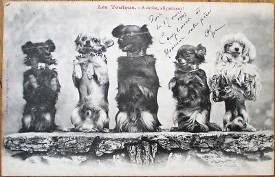 Dogs Standing on Hind Legs 1903 Bergeret Postcard - French Fantasy