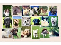 Friendly and professional dog walking & pet services. Fully insured & CRB checked.
