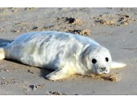 REDUCED - FOUR NIGHT November break at dog friendly Norfolk holiday cottage in seal pupping season